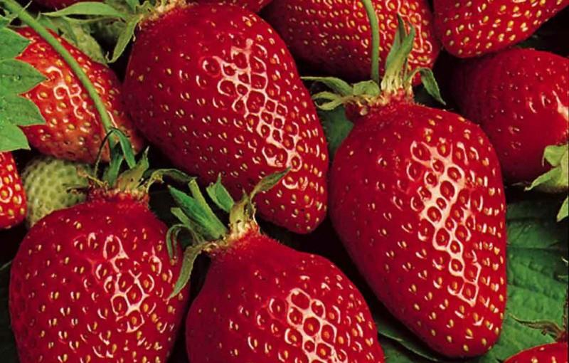 Crème fraise au mascarpone