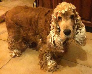 Chien-chien des neiges
