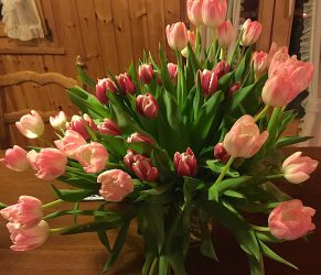 Les belles tulipes d'Allan
