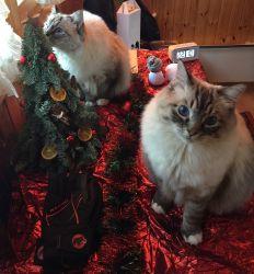 Enfin un sapin de Noël à notre hauteur!