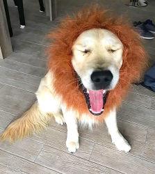 Chien-chien lion